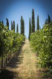 Napa Valley Grape Farm Royalty Free Stock Photography