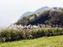 Scenic lookout at the north rim of Aso volcanic caldera. Aso-Kuju National Park, Kumamoto prefecture, Japan royalty free stock photo