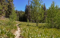 A Meadow on the Way to Marlette Lake in Lake Tahoe royalty free stock photography