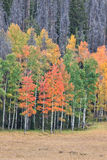 Scenic Meadow and Aspens in Fall Royalty Free Stock Photo
