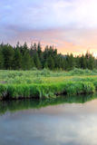 Scenic Meadow in the Uinta Mountains. Royalty Free Stock Photo