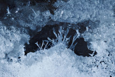 Scenic micro landscape of hoarfrost Royalty Free Stock Images