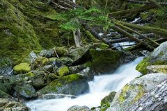 Scenic Montana Mossy Creek Stock Photos