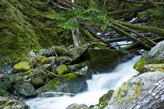Scenic Montana Mossy Creek Stock Photos