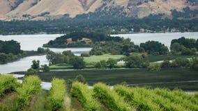 Vineyard View stock footage