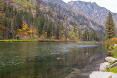 Scenic Mountain green Wenatchee river with transparent water. Royalty Free Stock Photo