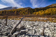 Scenic mountain landscape in the autumn. Stock Image