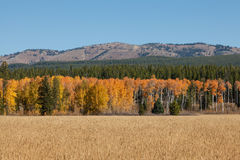 Scenic Mountain Meadow Landscape in Fall Stock Photography