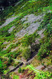 Scenic mountain side view. A scenic mountainside view taken from up high. There is a stone wall running through diagonally, surrounded by foliage, trees and Stock Images