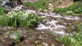 Scenic Mountain Stream stock footage