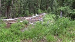 Scenic Mountain Stream. A scenic mountain stream near aspen colorado stock video