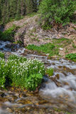 Scenic Mountain Stream in Summer Royalty Free Stock Photos