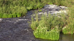 Scenic Mountain Stream and Wildflowers stock video