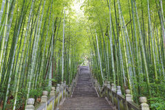 Scenic mountaineer step stairs next to the bamboo forest Stock Photos