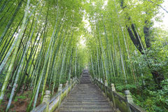 Scenic mountaineer step stairs next to the bamboo forest Stock Photo