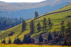 Scenic mountainside. A scenic view of a mountainside, with trees Royalty Free Stock Photos