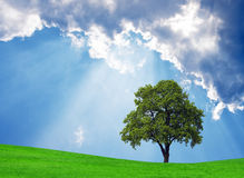 Scenic nature background. Green field,tree and beautiful sky Royalty Free Stock Photo