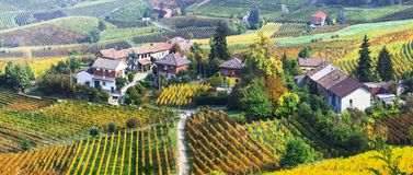 Scenic nature. Golden vineyards of Piemonte. famous vine region of Italy. Impressive colorful vineyards in Piemonte region,Italy stock images