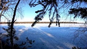 Scenic nature plant leaves shaking with air flow in a winter wonderland in europe surrounded with birch pine trees. Infront of a frozen lake stock footage
