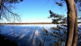 Scenic nature plant leaves shaking with air flow in a winter wonderland and long shadow of birch pine trees. Infront of a frozen lake stock video