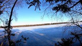 Scenic nature plant leaves shaking in a winter europe wonderland and long shadow of birch pine trees. Infront of a frozen lake stock footage