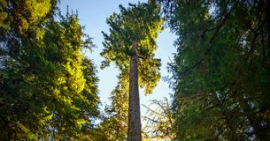 Scenic Nature Washington State - Olympic National Park.  royalty free stock images