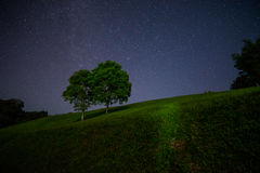 Scenic night landscape of two big tree with many star. On the sky Royalty Free Stock Image