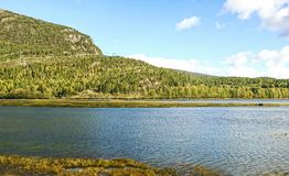 Scenic Norway landscape in a daylight with the river, forest and stones in the front of view. royalty free stock photos