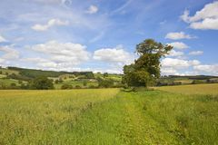 Scenic oat field in a patchwork summer landscape Stock Photo