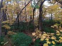 Scenic Ohio fall woods Royalty Free Stock Photo