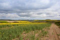 Scenic oilseed rape crops Royalty Free Stock Image