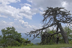 Scenic Old Tree Looks Over Ancient Mountains Stock Images