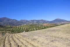 Arable fields, olive groves and mountains. Scenic olive groves near mountains with a foreground of plowed soil under a clear blue sky in andalucia spain Royalty Free Stock Images