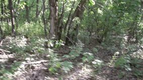 Scenic panorama of green forest thicket in summer.  stock video footage