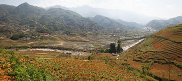 Scenic panorama of rice field terraces Royalty Free Stock Photo