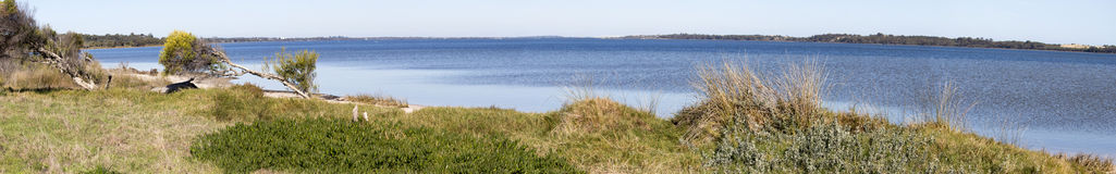 Scenic Panorama  from the walkpath along the Leschenault Estuary Bunbury Western  Australia . The panoramic view of the environment around the  shallow Royalty Free Stock Photos