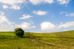 Single tree on a green hill Royalty Free Stock Image