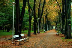 Scenic park in autumn. Pathway and benches in tree lined park, autumn scene stock photos