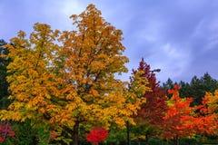 Scenic park-garden Stock Image