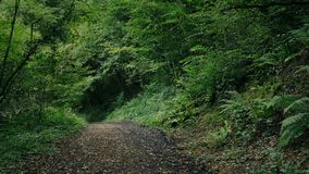 Scenic Path Through The Forest. Dirt path through the forest on summer day stock video