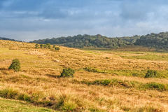 Scenic path in Horton Plains Royalty Free Stock Images