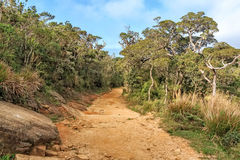 Scenic path in Horton Plains Stock Image