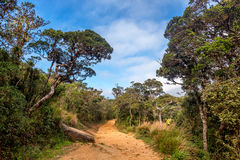 Scenic path in tropical mountain forest on hike Stock Photography