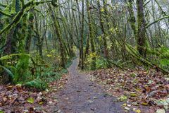 Scenic pathway in the forest royalty free stock photos