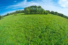 Scenic picture of a meadow Stock Photography