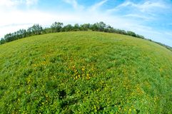 Scenic picture of a meadow Stock Photos