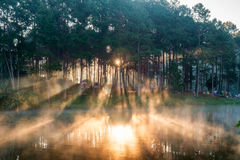 Scenic pine forest light shine on reservoir at pang oung Stock Image