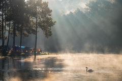 Scenic pine forest sunlight shine on fog reservoir in morning at Royalty Free Stock Photo
