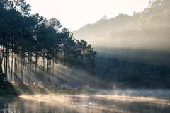 Scenic pine forest sunlight shine with swan on fog reservoir in. Morning at pang oung,mae hong son,thailand Royalty Free Stock Image