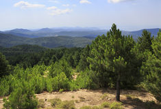 Scenic pine trees on a mountain top. Stock Photo
